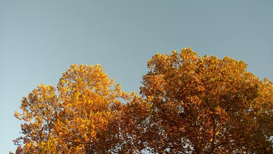 autumn-leaves-blue-sky